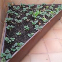 jardineras-2013-03-24 08.52.08 (Copiar)