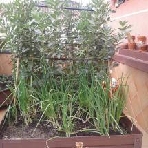 jardineras-2013-03-24 08.52.22 (Copiar)